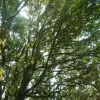 Lorbeerwälder auf La Gomera