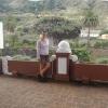 Wir sind beim Drachenbaum in Icod de los Vinos (Teneriffa)