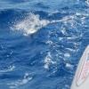 Das war der Fisch, den wir fast gefangen hätten, wenn er nicht doch noch abgerissen wäre :-(