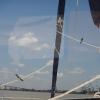 Kaum im Suriname-Fluss belagern die Vögel unser Schiff