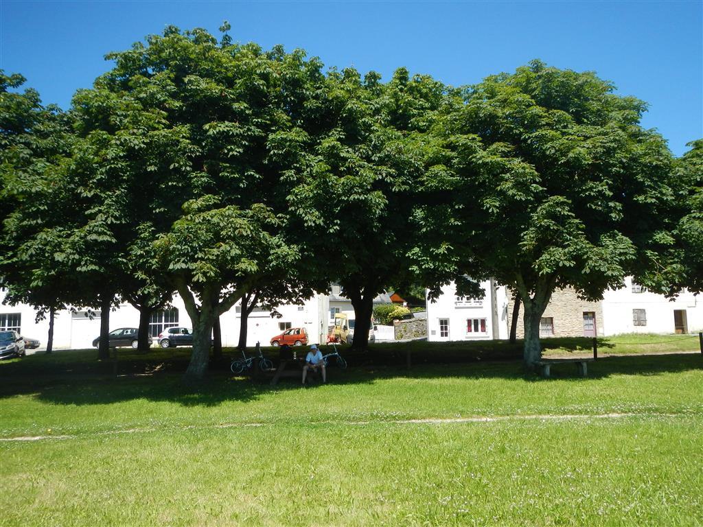 Fahrradtour, ganz oft sind hier wunderschöne Kastanienbäume anzufinden.