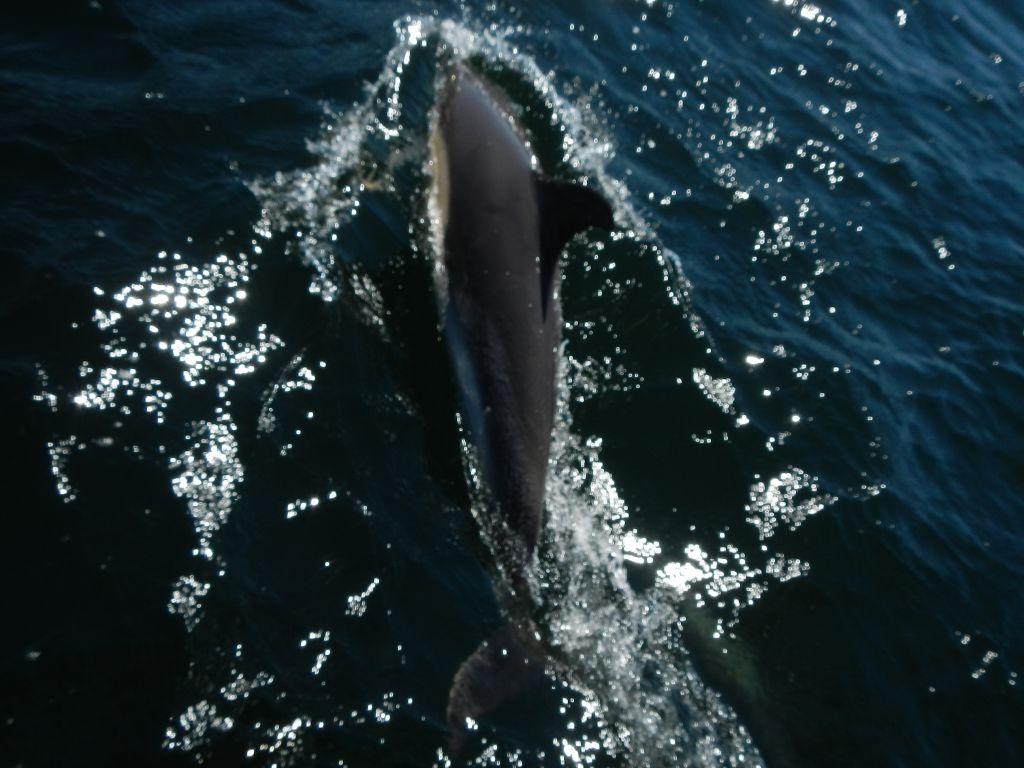 Delfine begleiten uns fast immer