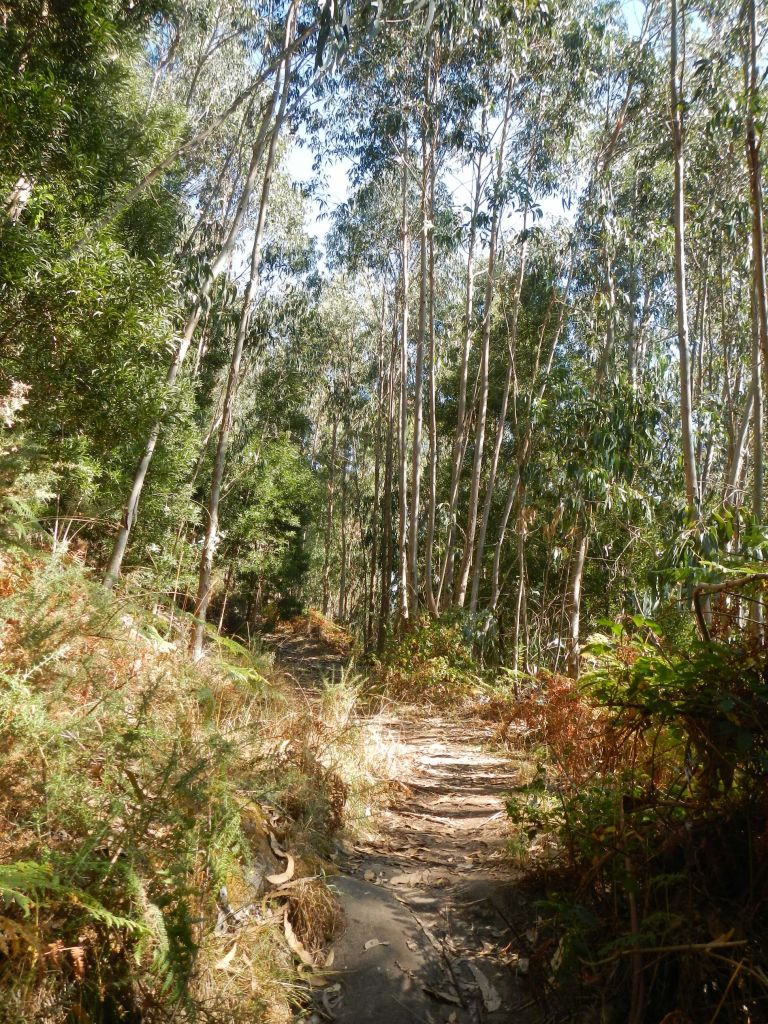 Wanderung durch die Eukalyptuswälder