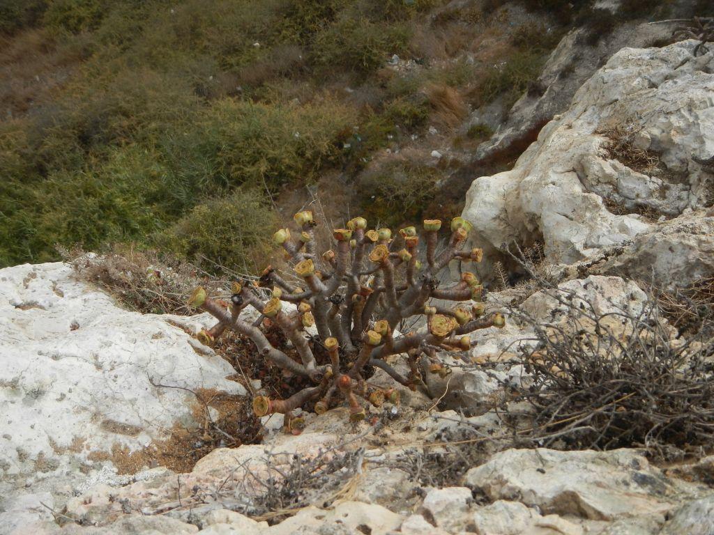 An der steilen Felswand wachsen interessante Dinge.