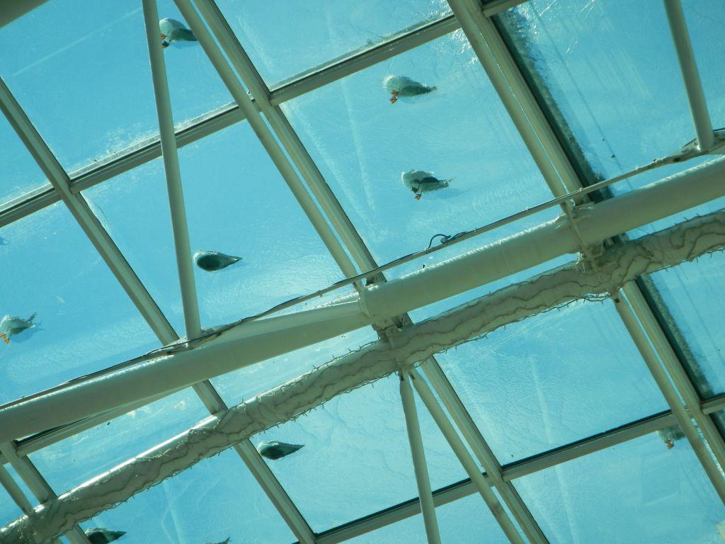 Die Möwen lassen sich die Füße kühlen, durch das Wasser, was über das Glasdach des Einkaufszentrums läuft.