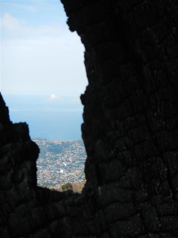 Waldbrände haben in letzter Zeit viele Bäume zerstört. Im Hintergrund sieht man Funchal.