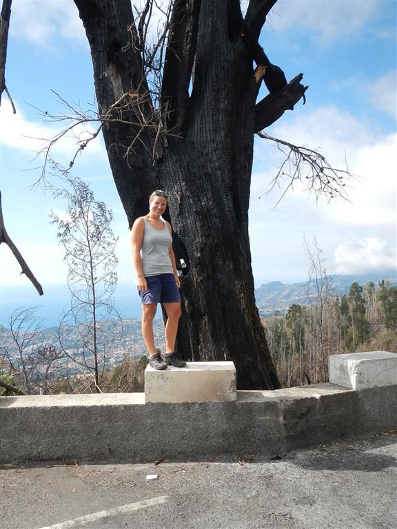 Waldbrände haben in letzter Zeit viele Bäume zerstört.