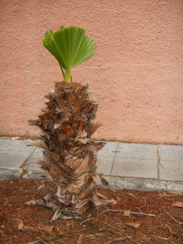 ...und diese Palmen sieht man auch überall.
