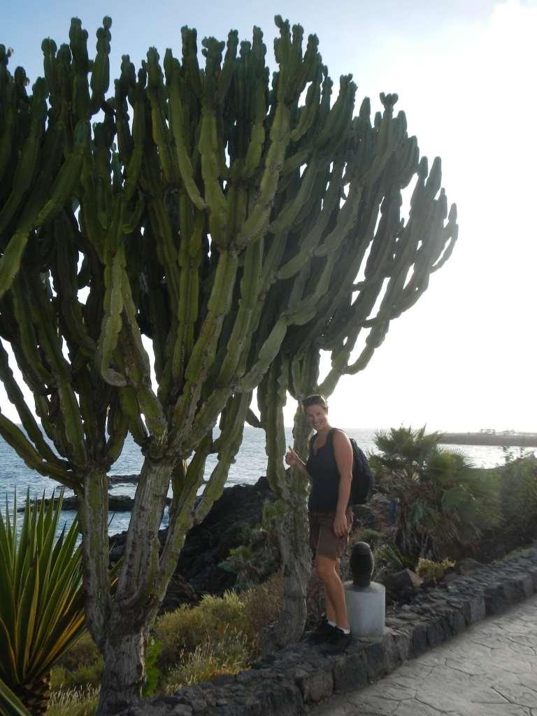 Was für ein Kaktus!!!