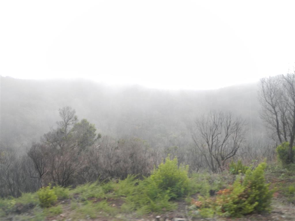 Weiter oben in den Bergen stauen sich die Wolken und es wird feucht.