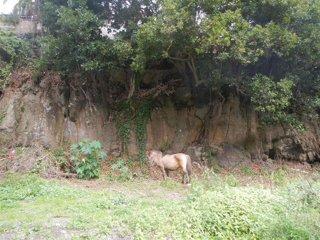 Zu Beginn unserer Wanderung war da plötzlich ein Pony mitten in der Pampa!