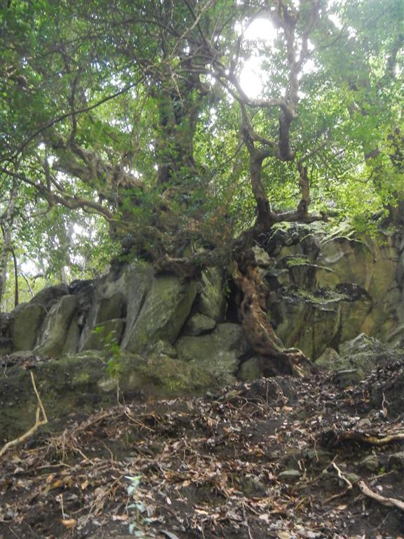 Die Bäume suchen sich auch an den Felsen Halt.