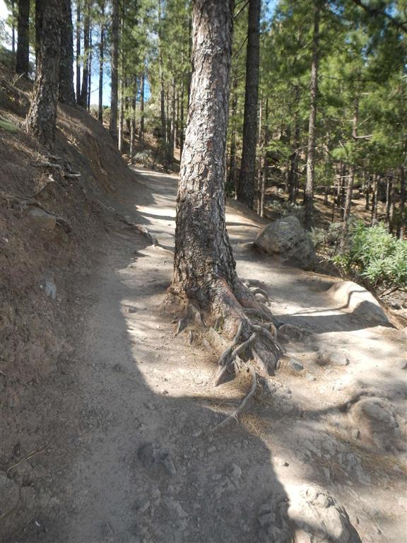 Weg zum Roque Nublo
