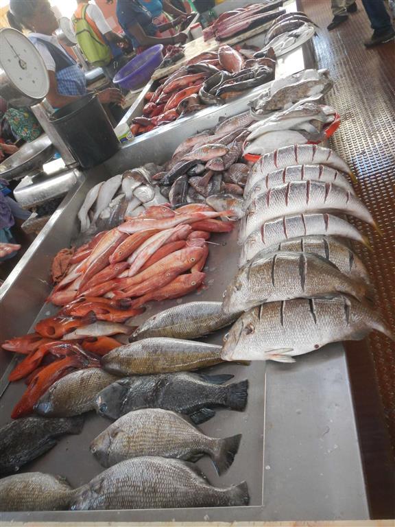Auf dem Fischmarkt in Mindelo