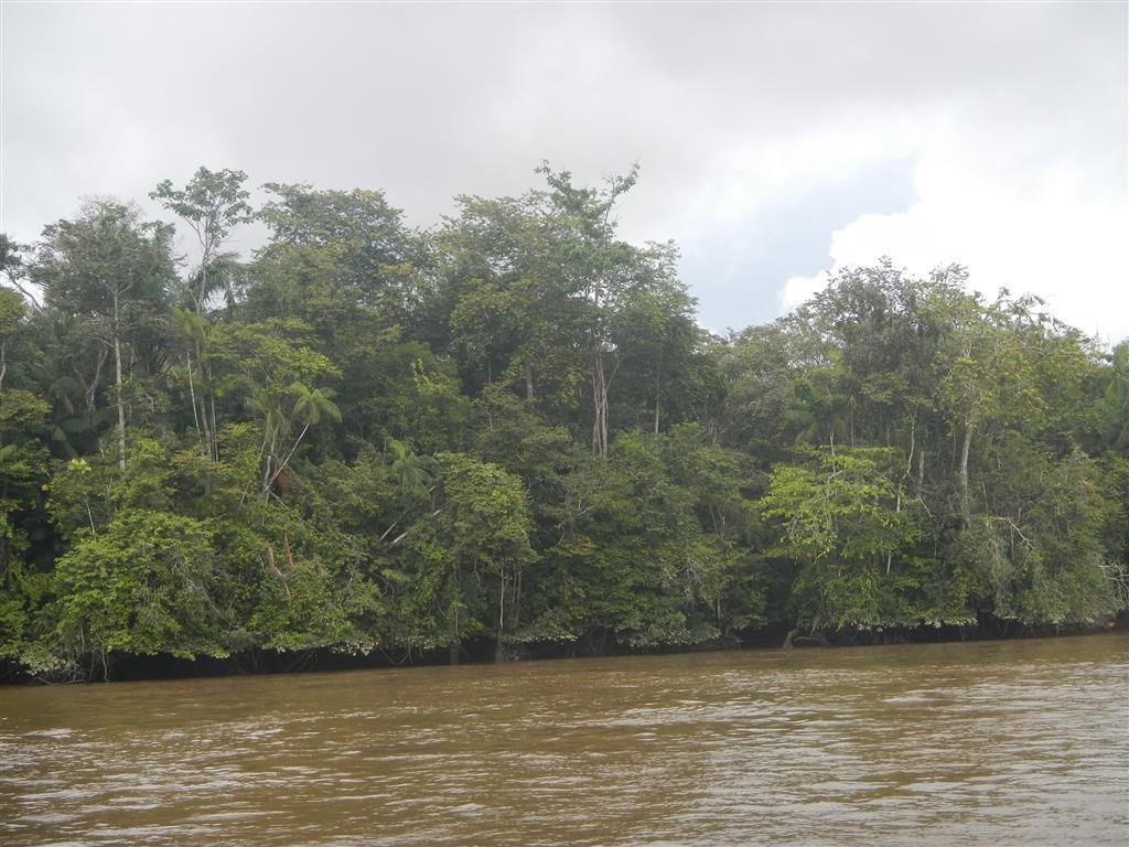 Im Maroni River sind wir plötzlich mitten im Dschungel!