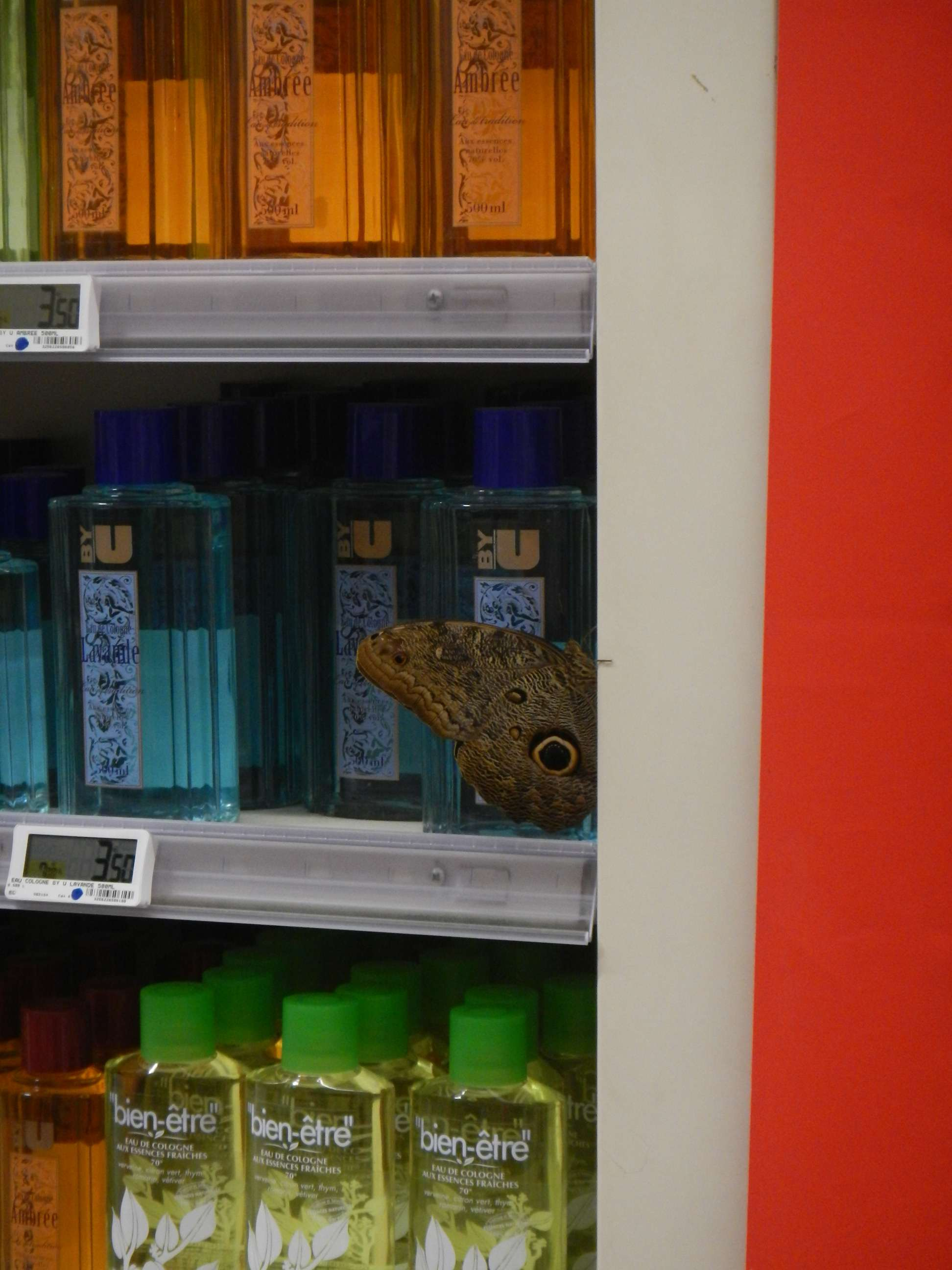 Ein Schmetterling im Supermarkt