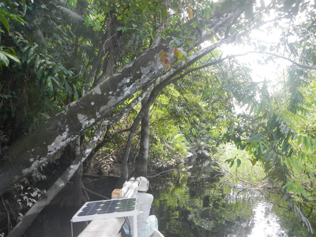 Im Dschungel mit Steve