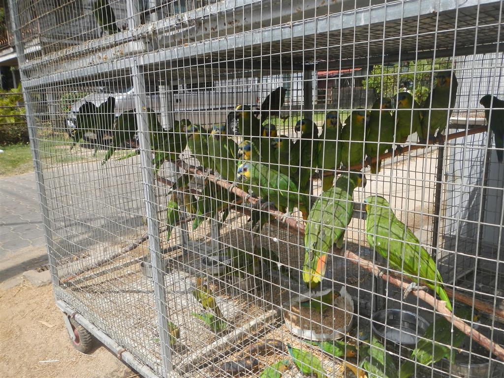 Leider gibt es hier auch einige Geschäfte für Tiere. In den Käfigen sind immer viel zu viele Tiere.