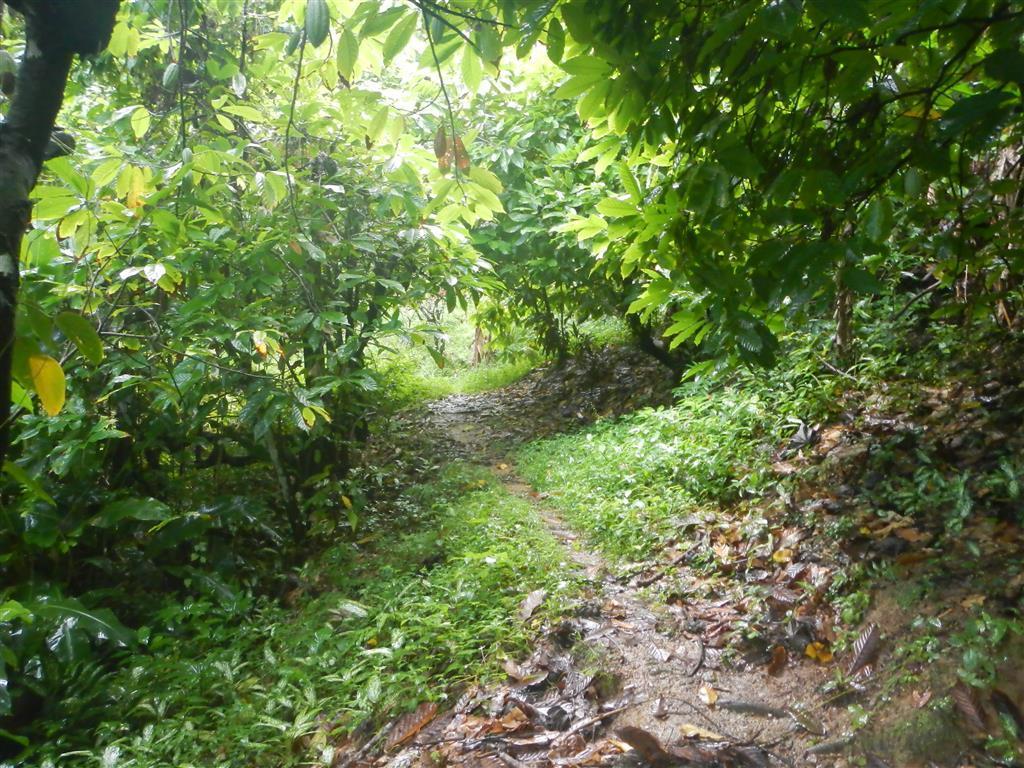 Mitten im Wald von Charlotteville, es ist unendlich grün und üppig