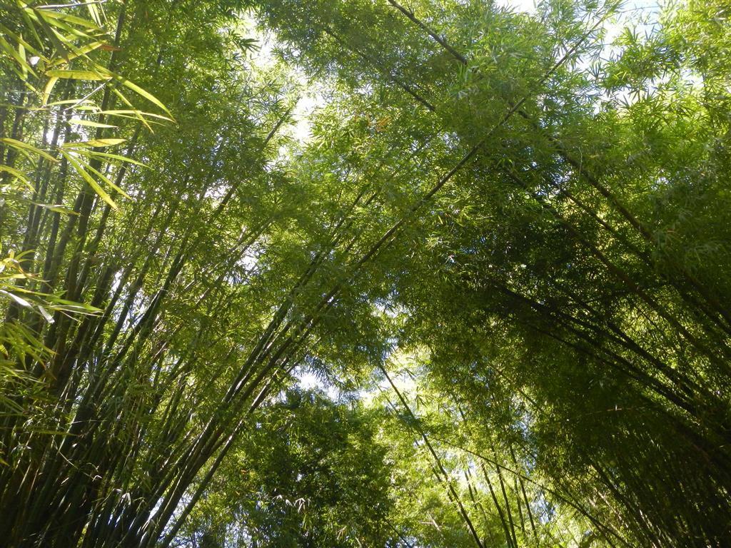 Wenn es durch die Bambusrohre windet, knackt es immer wieder