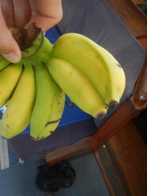 die doppelte Banane