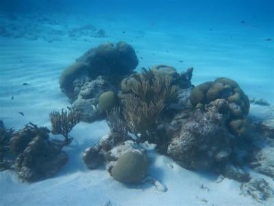 Unterwasseraufnahmen von den Tobago Cays