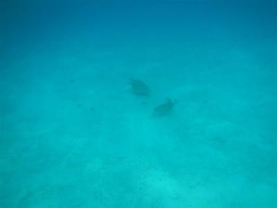 Wir sehen zwei Schildkröten auf einmal