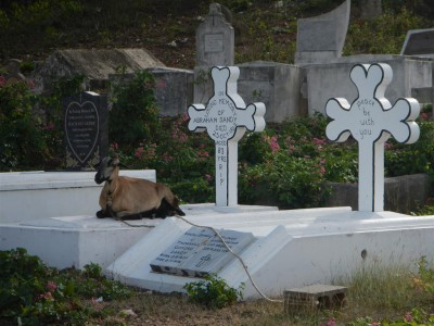 Die Ziegen pflegen den Rasen rund um die Gräber, diese scheint eine kurze Pause nötig zu haben