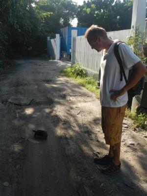 In Canouan gibts Schildkröten an Land.