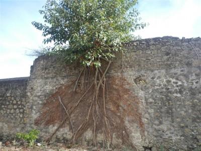 die Natur erobert das Fort zurück