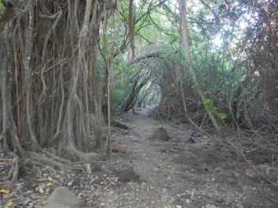 toller Weg am Rande des Sumpfgebietes im Nationalpark vom Dominica