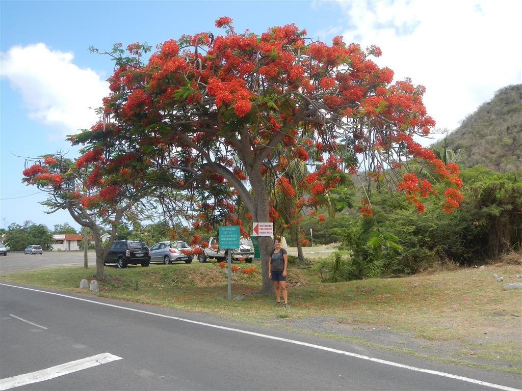 Martinique wird langsam aber sicher bunter