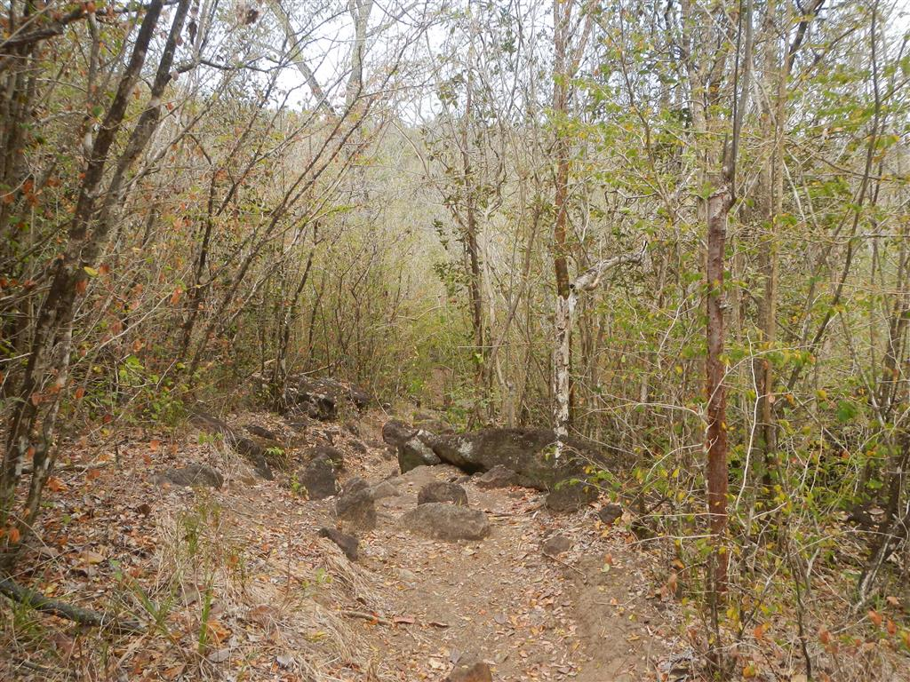 Wir machen ein kleine Wanderung durch die Berge zwischen Grande und Petit Anse d'Arlet