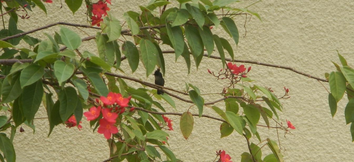 Wieder mal ein Punk-Kolibri, der ausnahmsweise mal still sitzt!