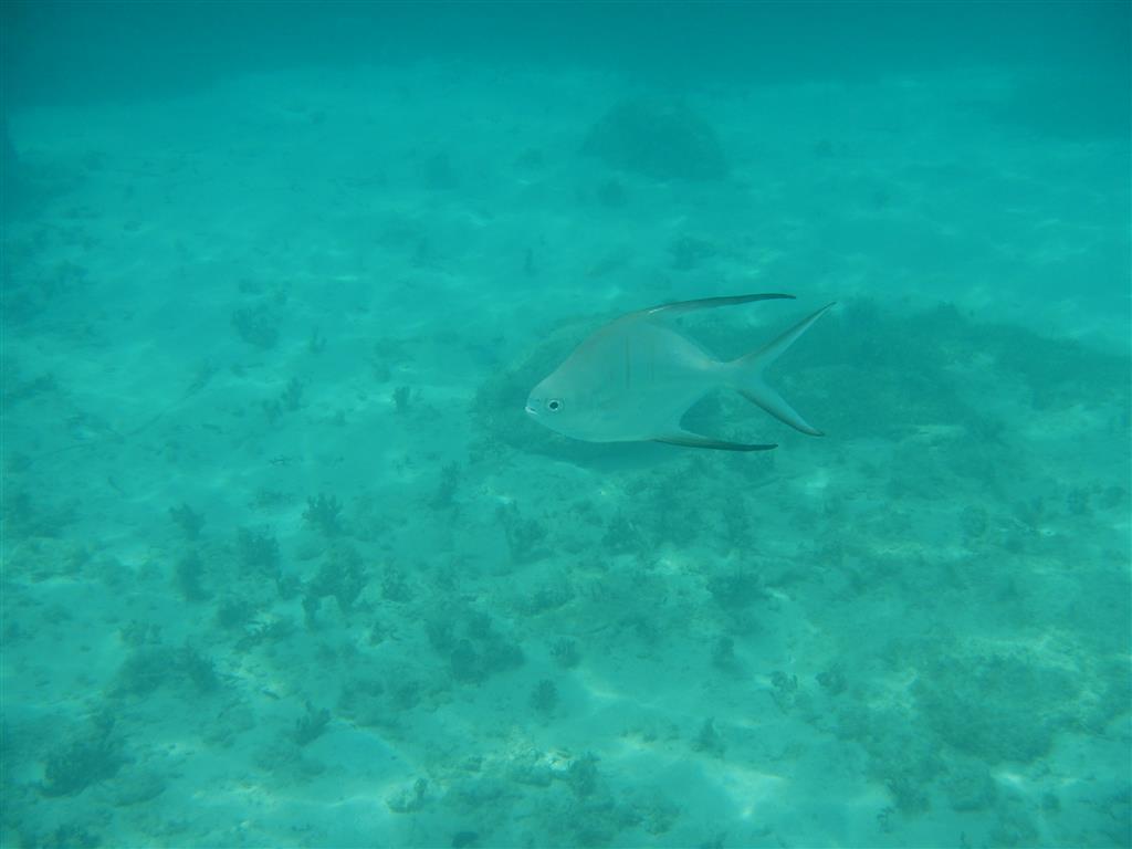Diese Fische schwimmen immer in der Nähe vom Strand, allerdings wissen wir nicht wie sie heißen.