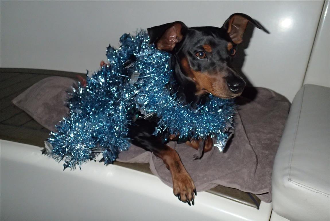 """Auch der Bordhund der """"Endless Summer"""" ist in Weihnachtsstimmung."""