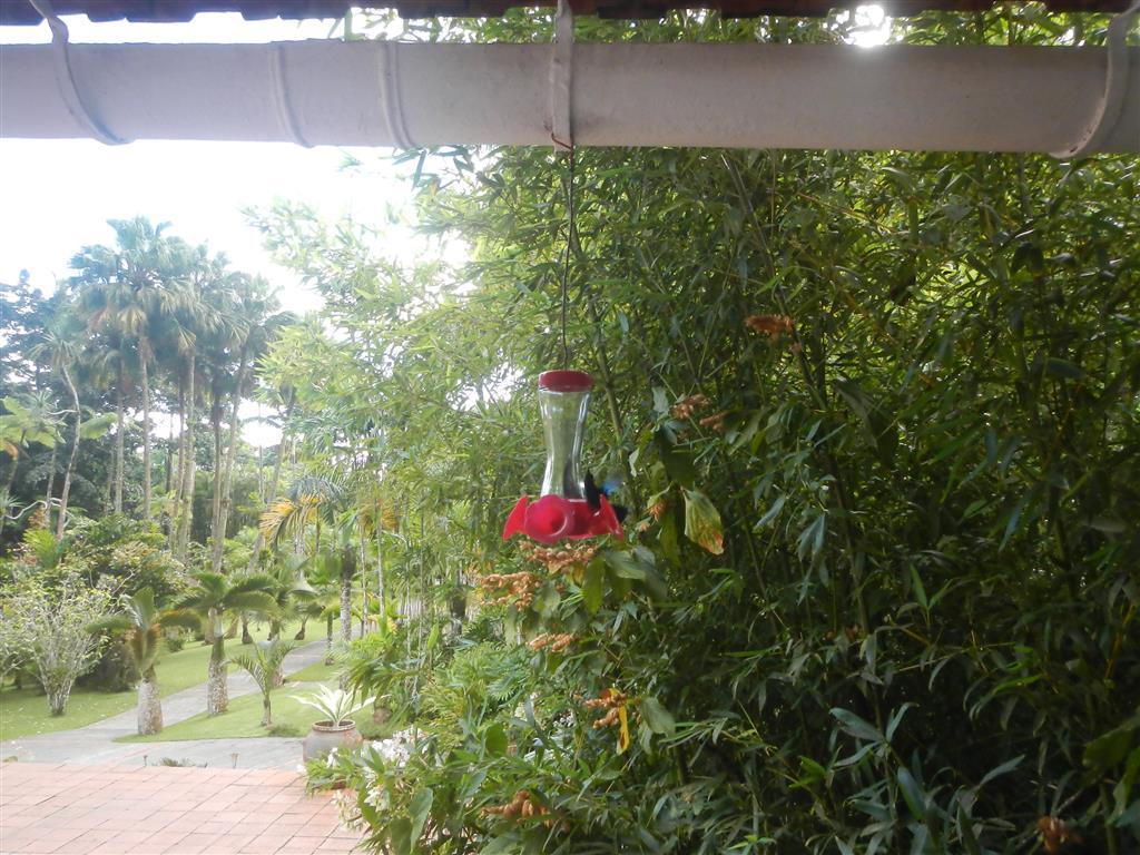 Im gesamten Botanischen Garten kann man Kolibris bestaunen
