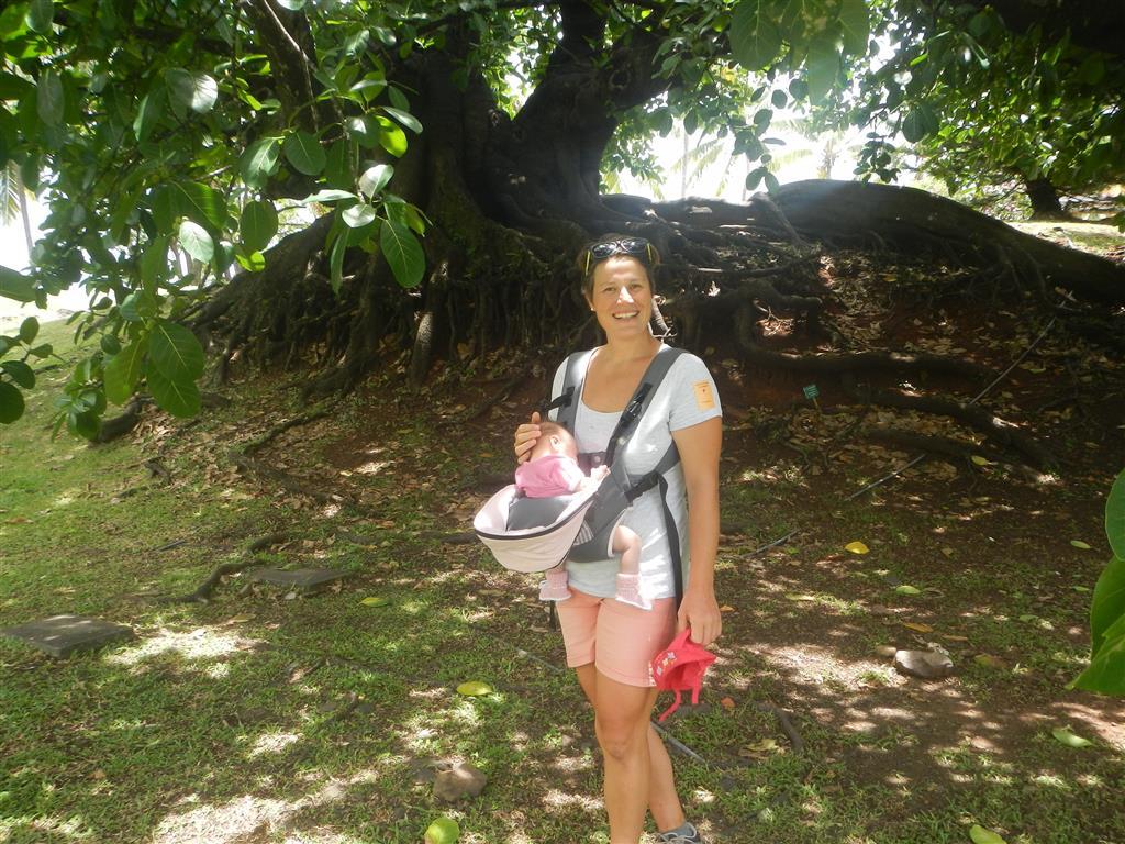 Wir laufen durch den botansichen Garten der Habitation Clement