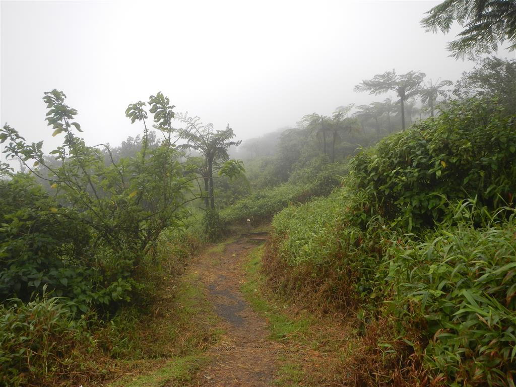 Wanderweg am Mont Pelée