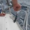 Fliegende Fische an Bord