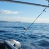 Wir sehen Wale auf dem Weg nach San Sebastian (La Gomera)
